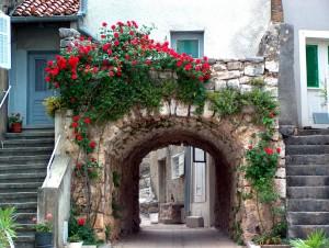 roses in old town jpg